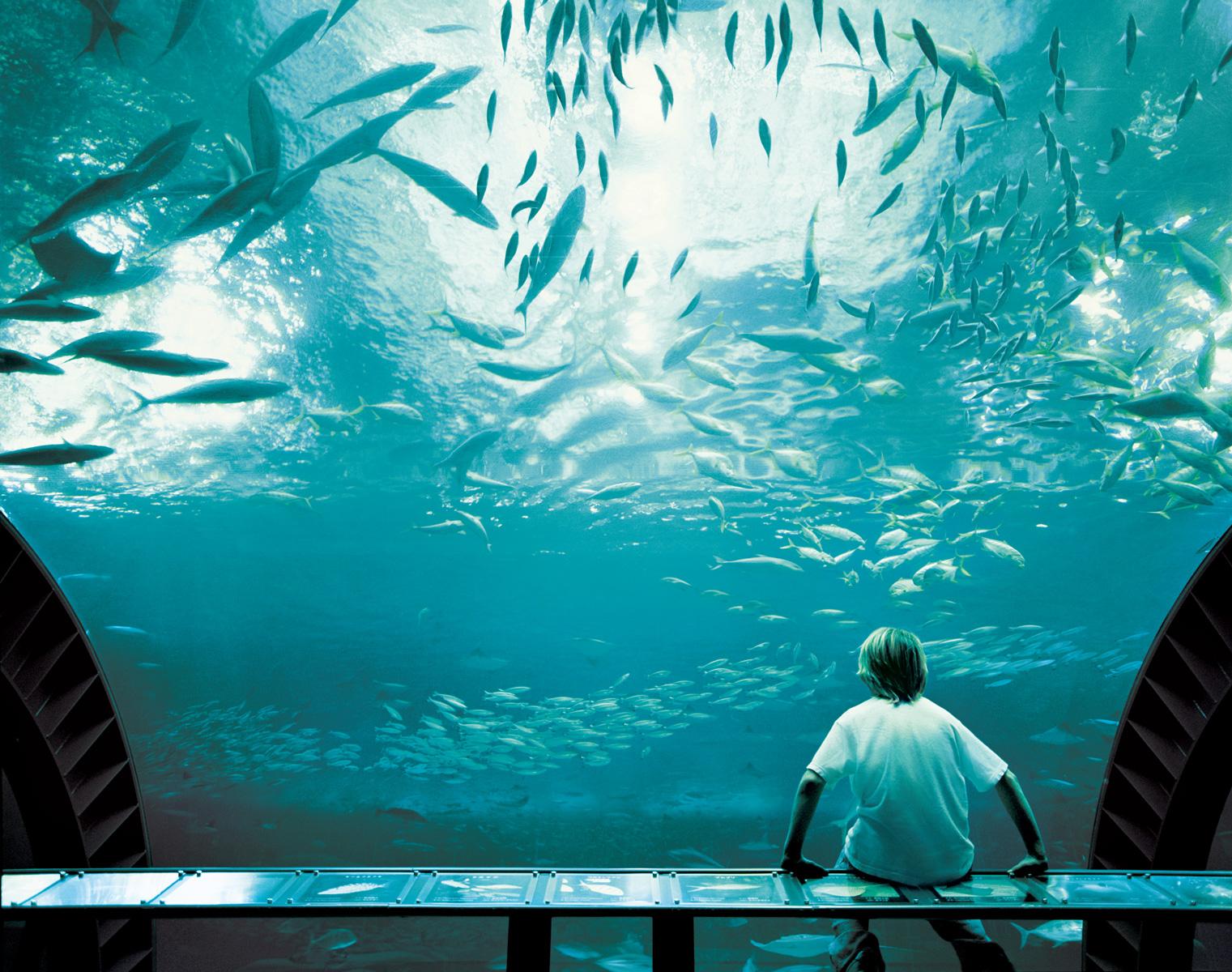 10c-05_Aquarium