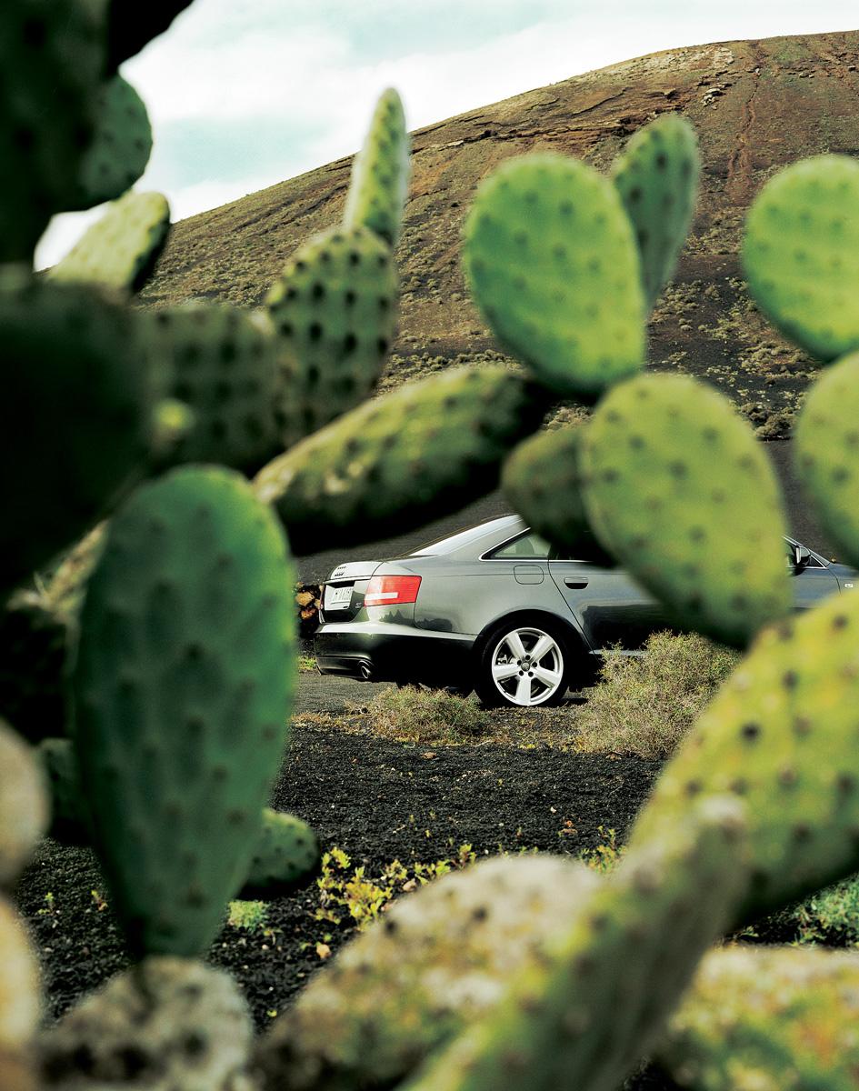 GQ_Cactus