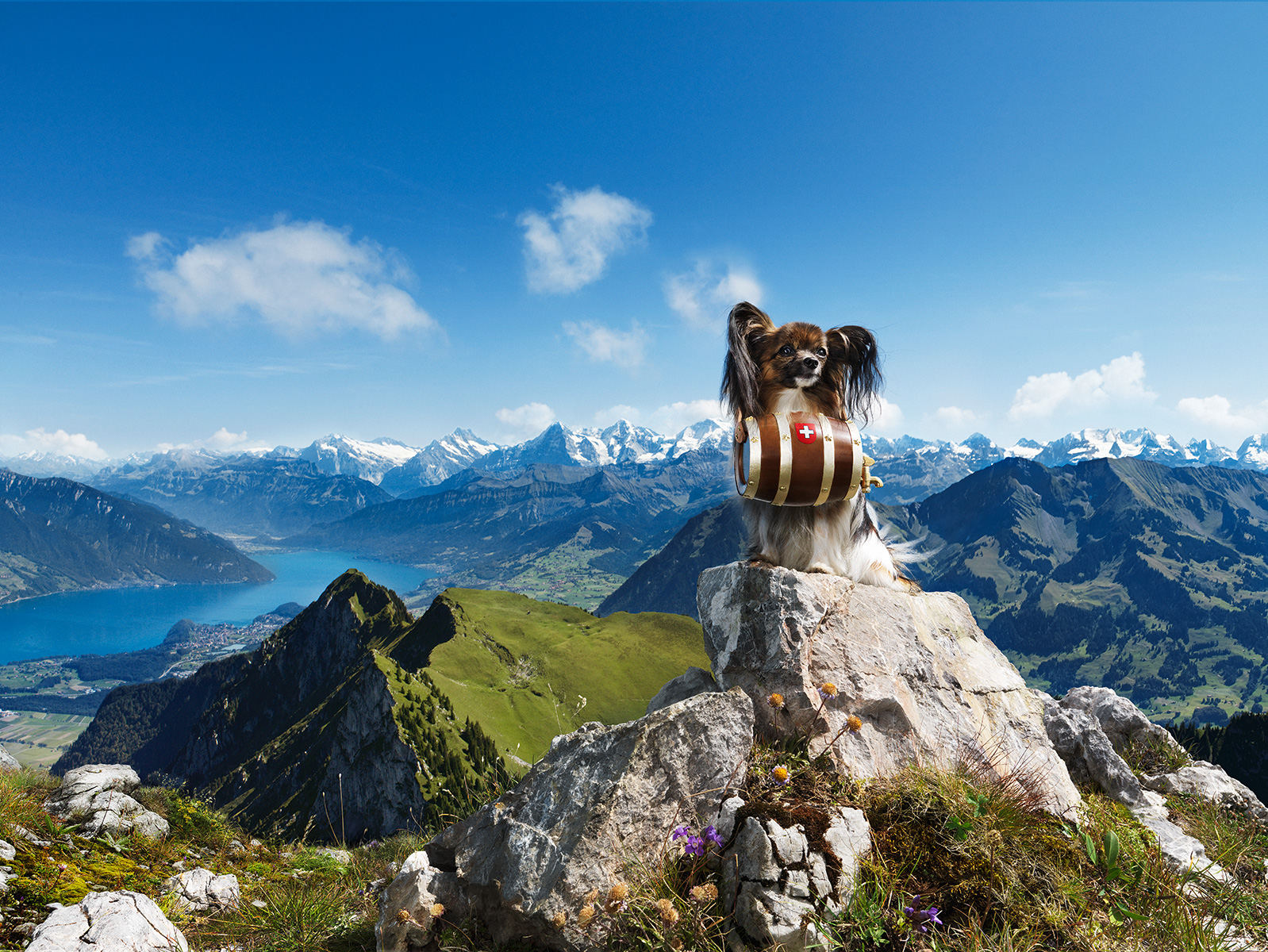 ST_Swiss_Tourism_Dog